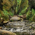 Oneonta Gorge: View toward the log jam.- Oneonta Gorge