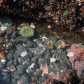 Tide pools at Yaquina Head State Natural Area.- Yaquina Head Outstanding Natural Area