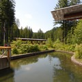Tillamook Forestry Center.- Wilson River + Tillamook Forestry Center