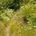 Wildflowers along the Wilson River Trail.- Wilson River + Tillamook Forestry Center
