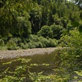 Wilson River.- Wilson River + Tillamook Forestry Center