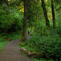 Trail toward Munson Creek Falls.- Munson Creek Falls State Natural Area