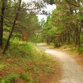 Trail from the campground to the beach.- South Beach State Park