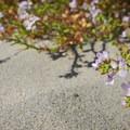 Unidentified species (help us identify it by providing feedback).- Neskowin Beach State Recreation Site