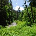 View along North Fork Silver Creek.- Silver Falls, Trail of 10 Falls