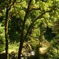 - Silver Falls, Trail of 10 Falls
