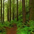 Siouxon Creek Trail.- Siouxon Creek Hike