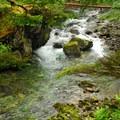Siouxon Creek.- Siouxon Creek Hike