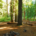 One of several campsites off of Straight Creek Rd and the Santiam River.- Tall Tree Campsites