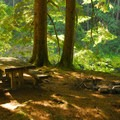 Old backcountry campsite at a swimming hole. Overnight camping is not permitted.- Carter Bridge Day Use Area