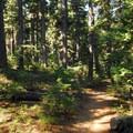 Tumalo Creek Trail.- Tumalo Falls + Creek Hike