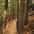 The 0.2-mile trail down to the lower viewpoint.- Paulina Falls