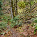 - Clackamas River Trail