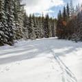 The trail leaving the Trillium Lake Loop.- Mud Creek Ski Loop