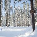- Trillium Lake Loop Trail