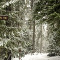 Good signs are a boon in low visibility.- Crosstown Ski + Snowshoe Trail