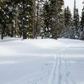 A recent snow blankets the trail before it is groomed.- Mt. Hood Meadows Eastside