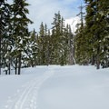 Mount Hood (11,250') peeks out over the firs.- Mt. Hood Meadows Eastside