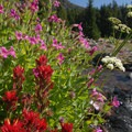 Wildflowers along the trail to Broken Top Crater.- Three Sisters Wilderness