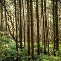 - Hobbit Trail