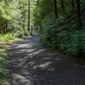 The first section of the Clatsop Loop is wide and surfaced with gravel.- Clatsop Loop