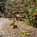 Brice Creek West Trailhead.- Brice Creek Trail, West Trailhead to Lund Campground Hike