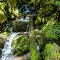 A small side creek along the Brice Creek Trail.- Brice Creek Trail, West Trailhead to Lund Campground Hike