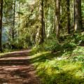 Hiking the Brice Creek Trail.- Brice Creek Trail, West Trailhead to Lund Campground Hike