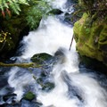 - Falls Creek Falls