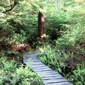 The winding boardwalk path to the cape.- Cape Flattery