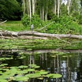 A heron haven.- Washington Park Arboretum Kayak/Canoe