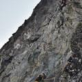 Climbing the West Ridge.- Forbidden Peak: West Ridge