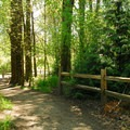 Oaks Bottom's River View Trail.- Oaks Bottom Hiking Trails