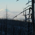 View of Mount St. Helens (8,366').- Tilly Jane Trail