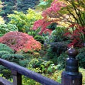 View from the Moon Bridge.- Portland Japanese Garden