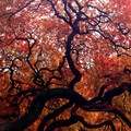 Japanese maple tree.- Portland Japanese Garden