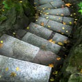 Stairs through the garden.- Portland Japanese Garden