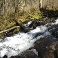 Coopey Creek.- Angels Rest + Foxglove Way Hike