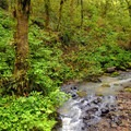 Balch Creek.- Pittock Bird Sanctuary Nature Trail