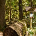 The trail junction to Upper Trestle Creek Falls.- Brice Creek Trail, Champion Creek Trailhead to Lund Campground Hike
