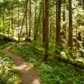 The trail leads through hemlock, cedar, and Douglas fir.- Upper Trestle Creek Falls Loop Hike