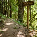 The initial climb is steep but gives way to a more gradual ascent.- Upper Trestle Creek Falls Loop Hike