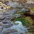Tide pools at Hug Point.- Hug Point State Recreation Site