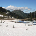 Looking north from the PCT on the east side of Naches Peak.- Tipsoo Lake + Naches Peak Loop Trail