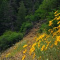 A section of the PCT just south of Cabin Creek Campsites.- Cabin Creek Campsites