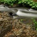 Squaw Valley Creek.- Cabin Creek Campsites