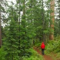Hiking along the Western Loop, just south of Lower Falls.- McCloud River Three Falls Hike