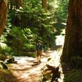 Hiking through the old-growth along Lena Creek.- Lena Lake Hike