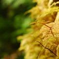Step moss (Hylocomium splendens).- Lena Lake Hike