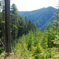 Boundary between second-growth forest and a relatively recent clearcut.- Jefferson Ridge Hike